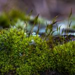 Het nut van de vele soorten mossen
