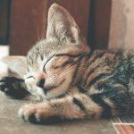 Maak jouw huis katbestendig met deze tips